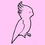 Pink Parrot Dubai