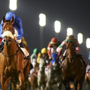 Racing at Meydan Thu 7 November 2019