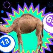 Bingo Loco Dubai - 2nd Night Added