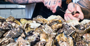 The MAINE Shuck Fest