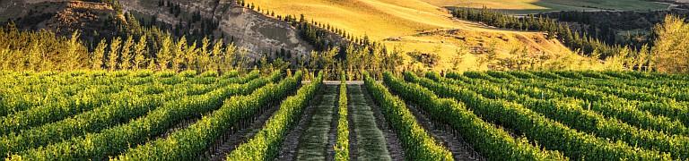 UAE Vine Festival 2021: Asado & Wine
